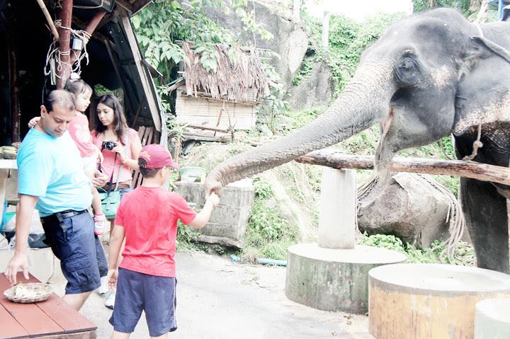 phuket elephant riding typicalben 14