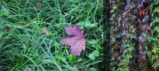 photo autumn18_zpsfe68d376.jpg