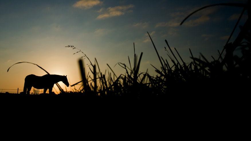 660-Sunrise.jpg