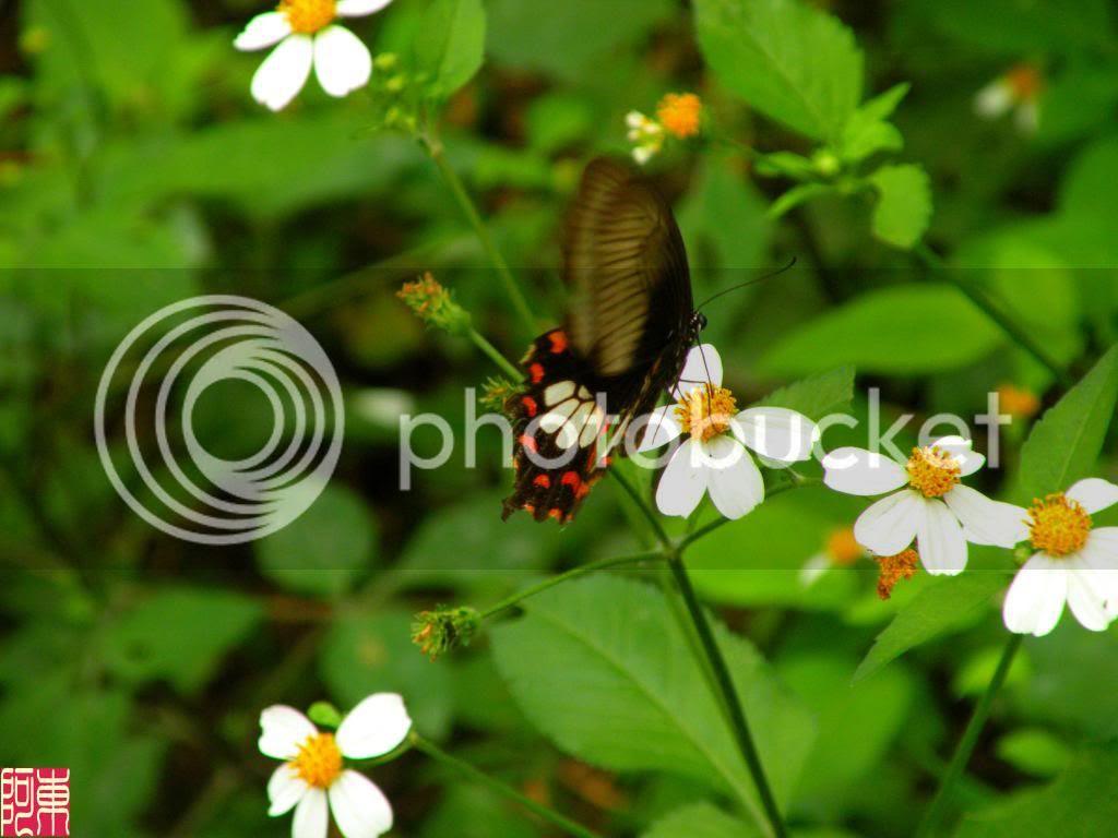 photo buom1_zps549c06dc.jpg