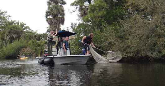 All hands on deck during manatee rescue attempt