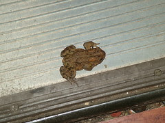 Good morning toad