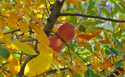 Stark bro 39 s nurseries orchards co google - Planting fruit trees in autumn ...