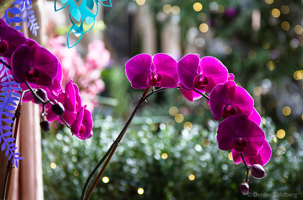 a spray of orchid