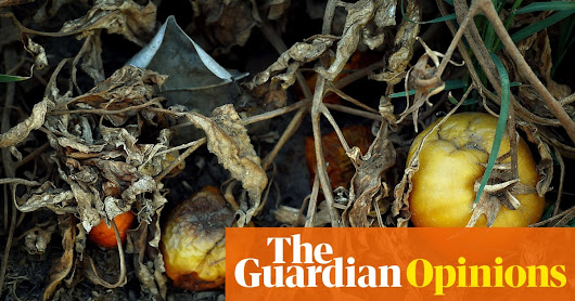 Chips, chocolate and coffee – our food crops face mass extinction too | Environment | The Guardian