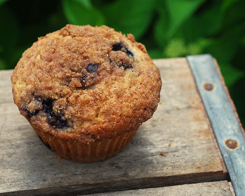 Blueberry Muffin solo