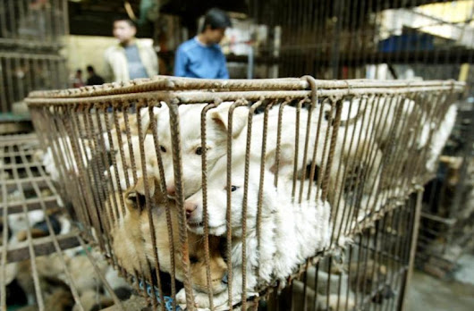 Yulin Dog Meat Festival 2015: China Officials Beseeched By Animal Rights Activists As Solstice Approaches