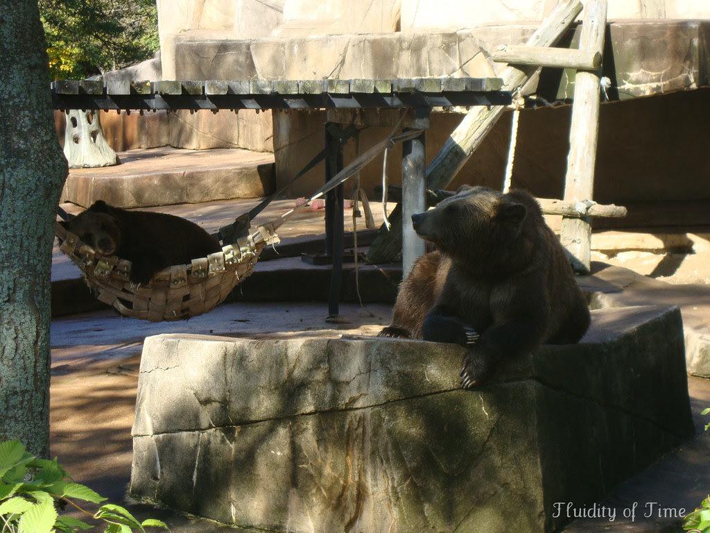 bear and bear.jpg