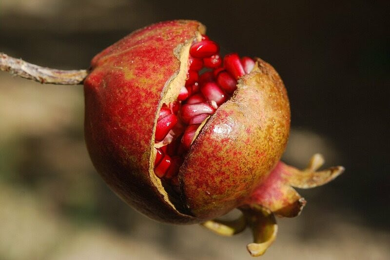 A pomegranate.