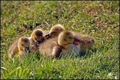 Fuzzy Babies