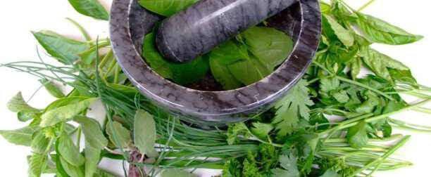 Κολιτσίδα: ένα πανίσχυροο αντικαρκινκό και αντιοξειδωτικό φυτό