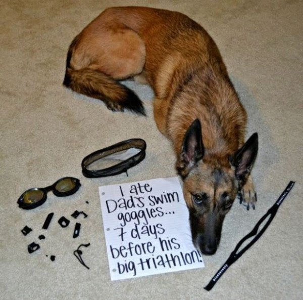 guilty-dogs-7