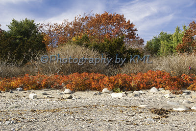 autumn trees and bushes against the ocean rocks