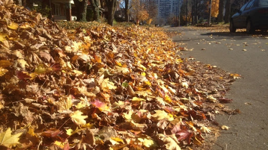 Kitchener leaf drop-off sites to open on Oct. 19
