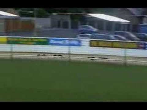 This Greyhound Wins the Race by Cheating