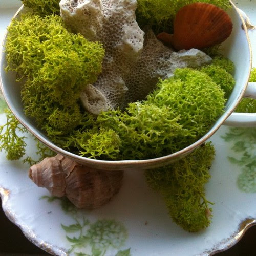 Mossy Tea Cup by Ayala Moriel