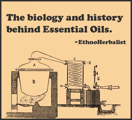 The science and cultural history of essential oils -