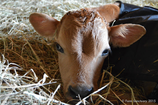 Survey - Baby boy needs a name! - Farm Sanctuary