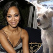 'Meet Mugsy!' Zoe Saldana adds to her family with a rescue dog... just in time for Christmas