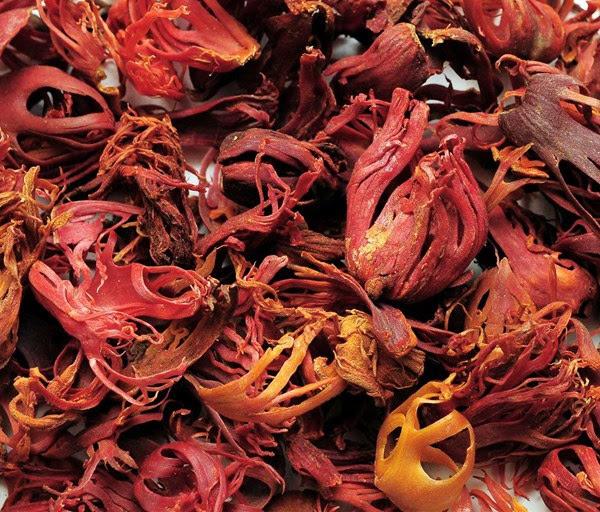 Pala, salah satu sumber daya alam Nusantara yang membuat orang Eropa kepincut datang Ke Nusantara. (www.kompasiana.com)