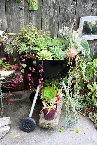 bbq grill and succulents