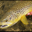 Fish Like a Guide, But, Live Like a Client Fly Fishing Schools in Southwest Montana - Healing Waters Lodge