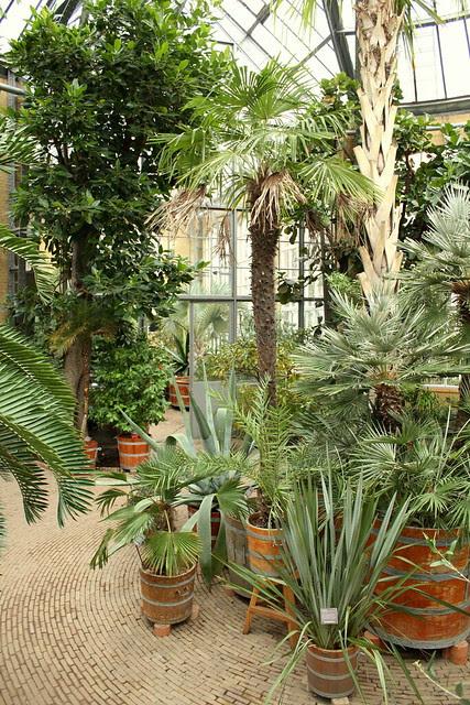 serre hortus botanicus
