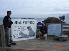 Tempat Seal Viewing Kat The Nobbies, Philip Island, Australia