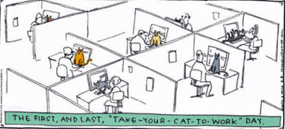 take-your-cat-to-work.jpg