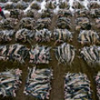 35 pictures of the sharkfin trade that will shock and dismay you