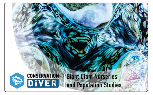 Giant Clam Nurseries and Population Studies - Conservation Diver