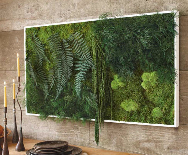 Fern and Moss Wall Art - eclectic - plants - by VivaTerra
