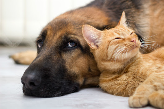 Cat Owners Beware: Dog Flu Has Spread to Cats | Catster