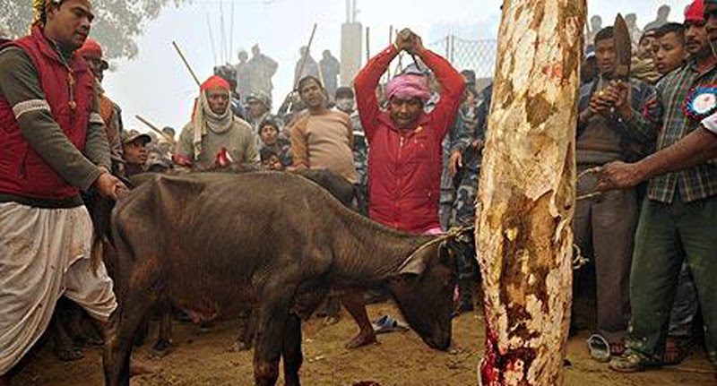 LAWS TO BAN ANIMAL SACRIFICE IN HINDU TEMPLES