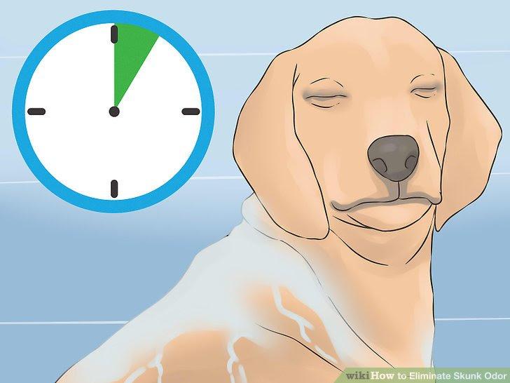 Eliminate Skunk Odor Step 10.jpg