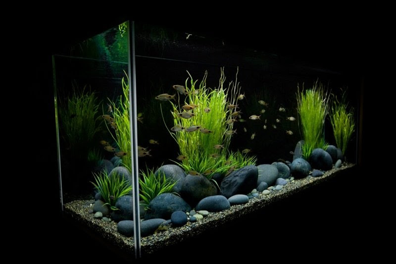 Einrichtung Nano Aquarium