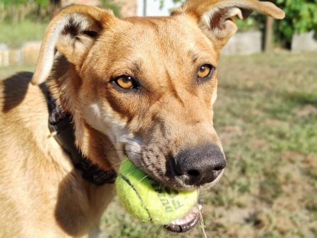 Mia – 8 month old female Cross-Breed