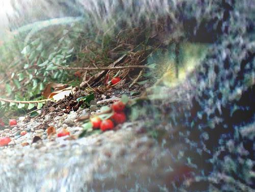 Miss Cat Flower's eye on the ground