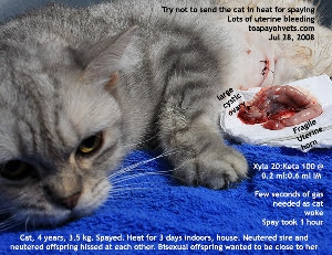 Dam. Heat 3 days. 2 cats fight over her. Toa Payoh Vets