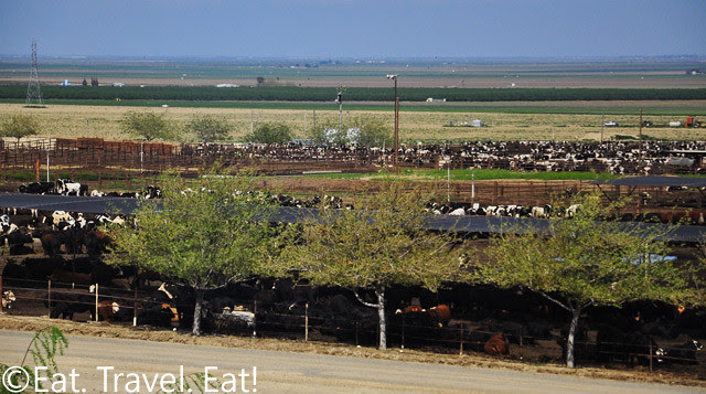Driving on Interstate 5- Cow Farm