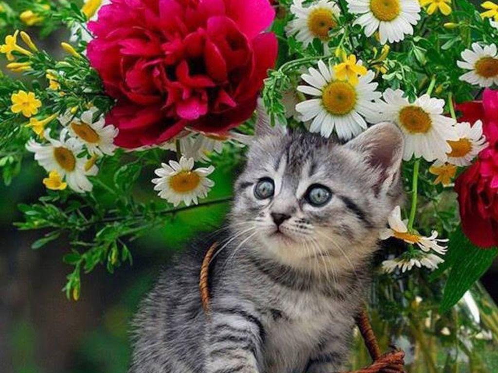 Resultado de imagen para wallpaper de flores cute