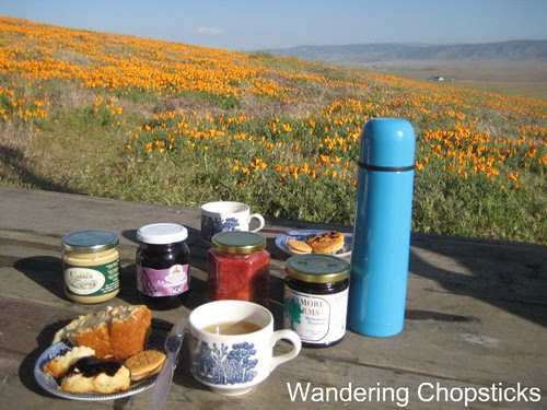 Antelope Valley California Poppy Reserve 10