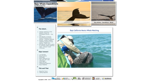 Baja Whale Expeditions