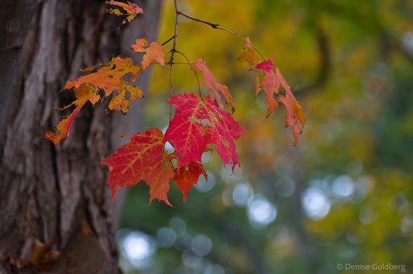 a few (leaves) in red