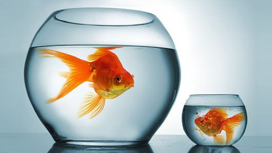 3 Must-Haves Distributors Need to Swim with the Big Fish | Unilog