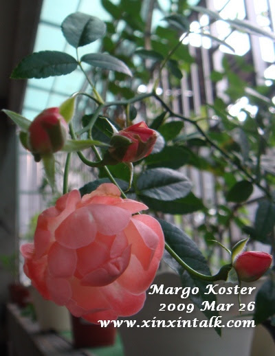 Margo Koster