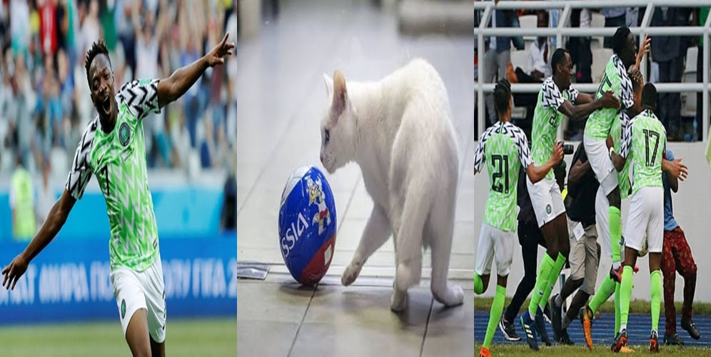 #Russia2018: Achilles the deaf cat picks Nigeria to beat Argentina in their final Group D match