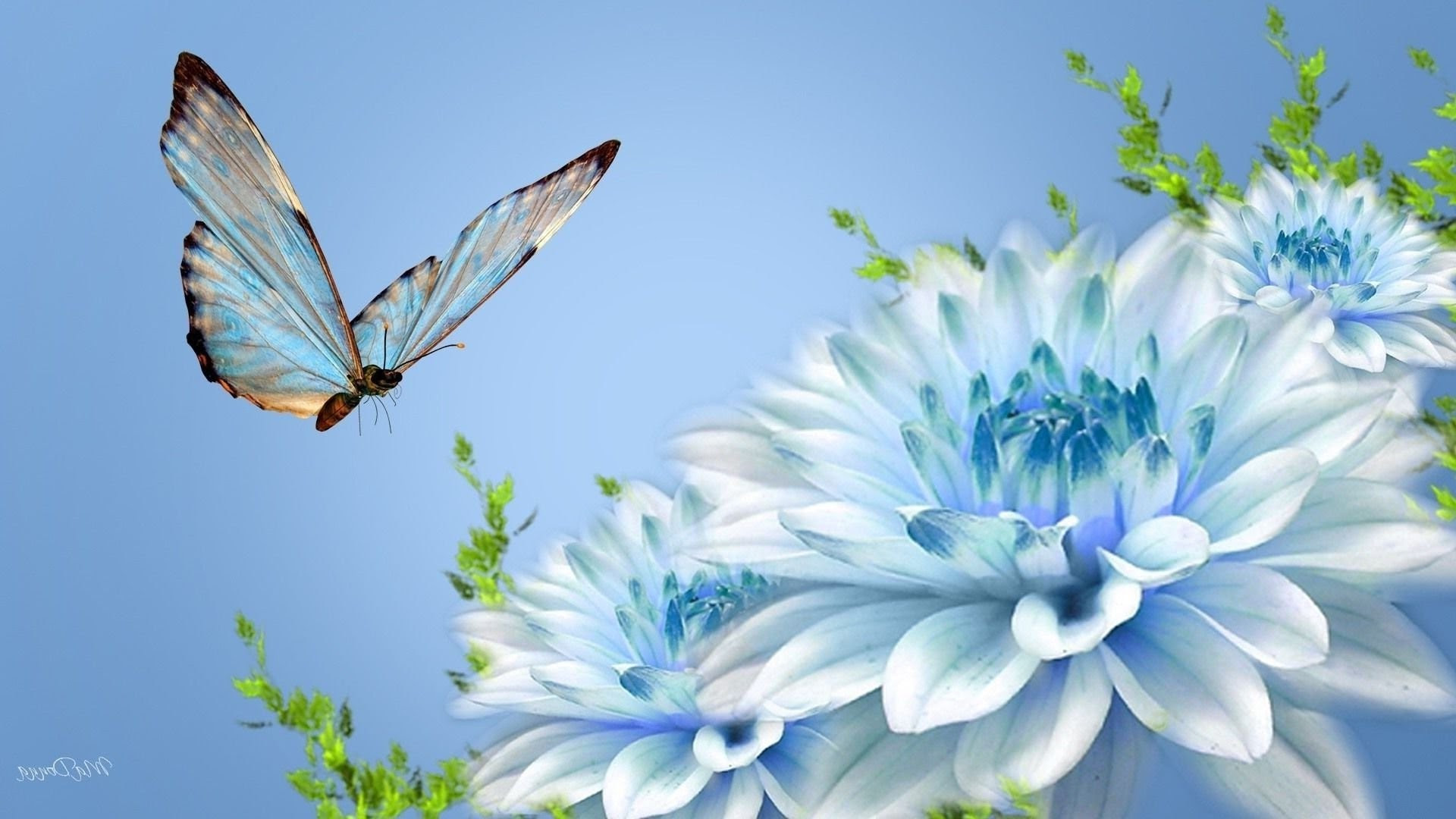 Beautiful Butterflies and Flowers Wallpapers (56+ images)