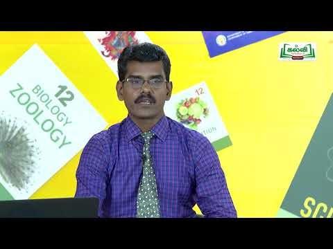 முப்பரிமாணம் Std 11 TM Chemistry வேதிவினை வேகவியல் பகுதி 2 Kalvi TV