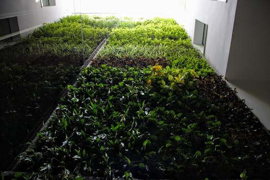Jardines verticales y techos verdes google for Techos verdes y jardines verticales